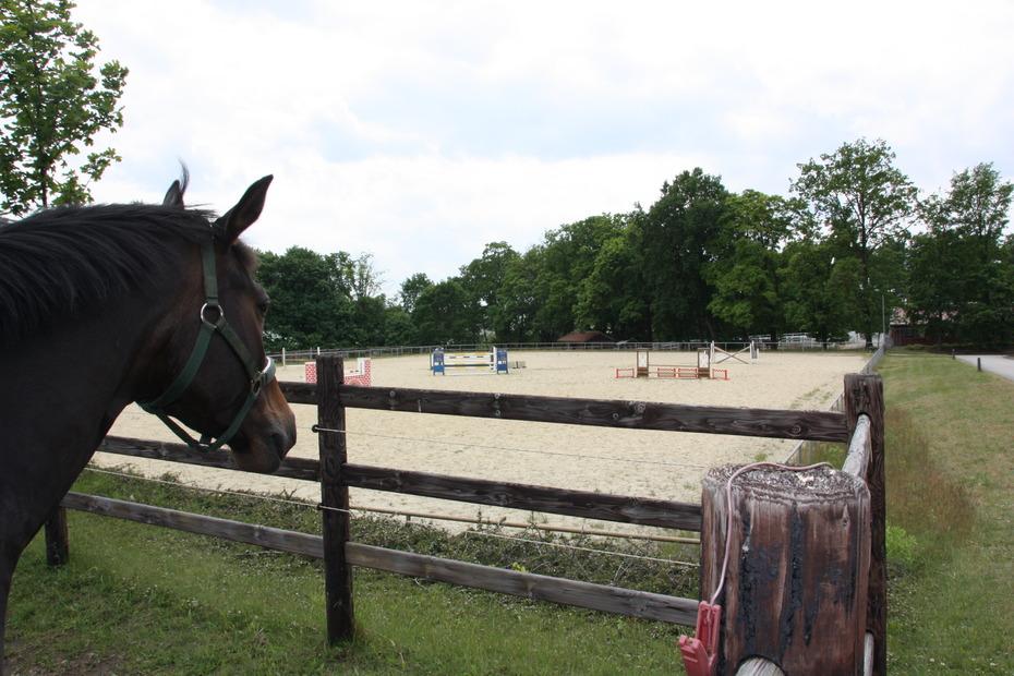 Pferdewissenschaften Berlin